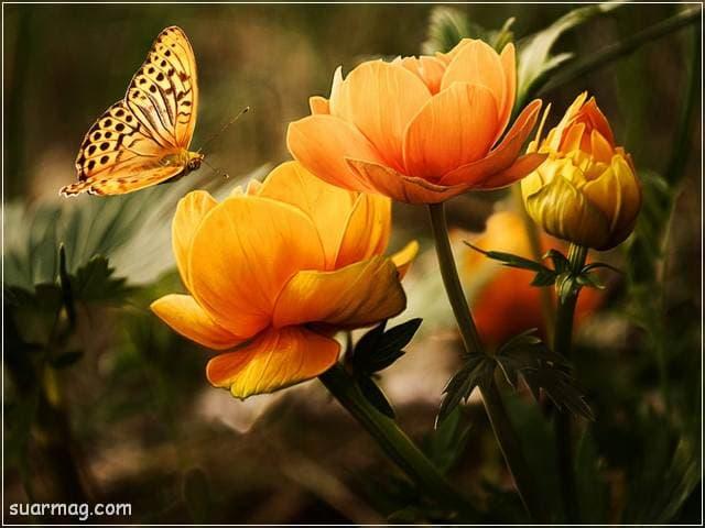 صور زهور 4 | Flowers Images 4