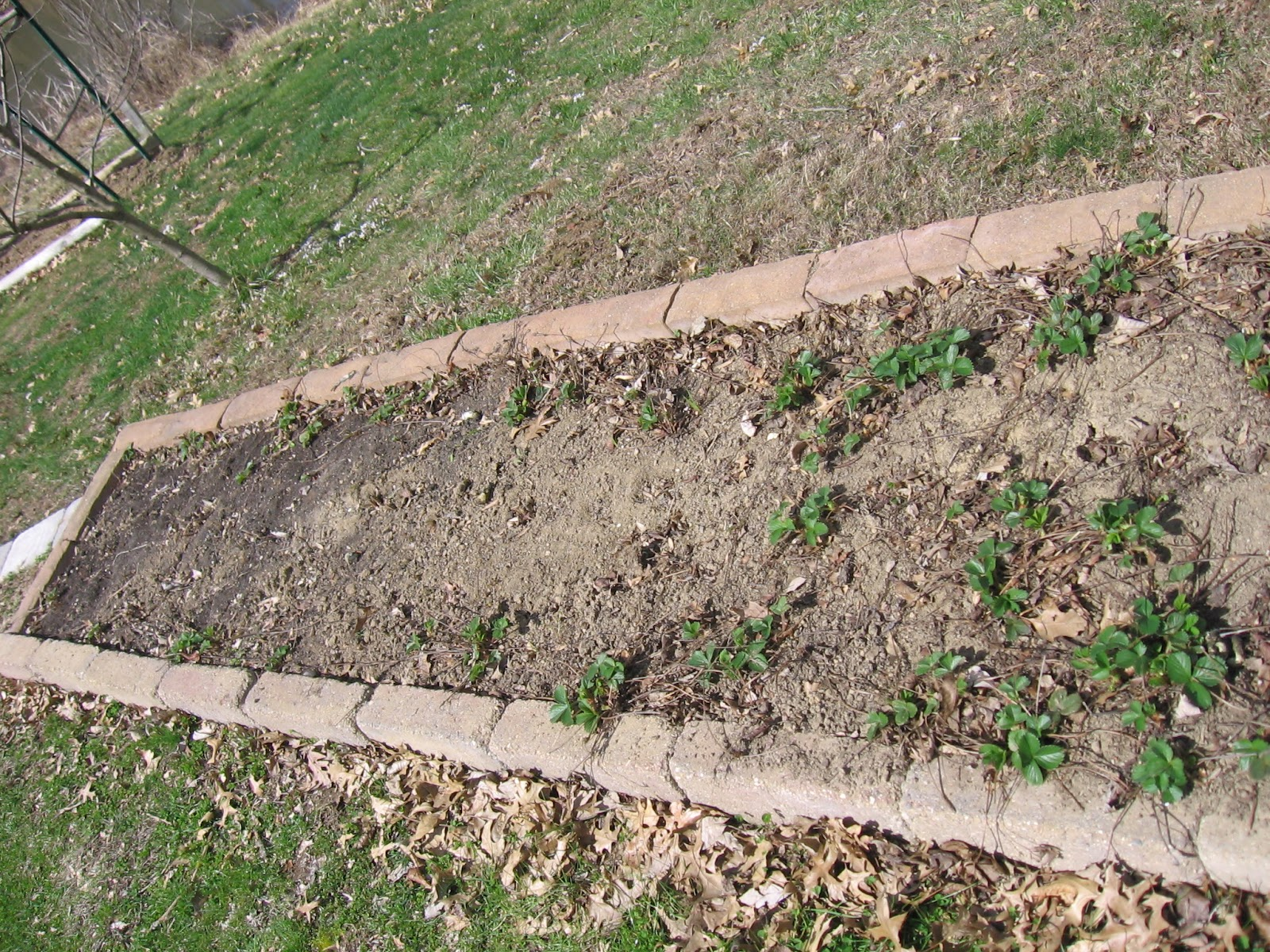 Mike S Bean Patch March 2016