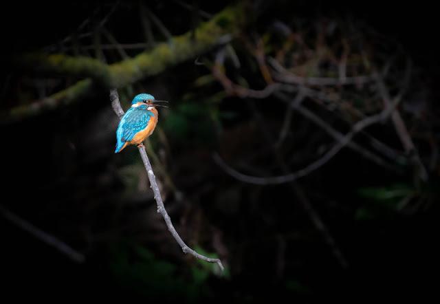 Profitez de la lumière, même si vous semblez entouré parfois par l'obscurité... Photo par Brice Cornet.