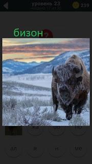 470 слов. все просто идет бизон зимой 23 уровень