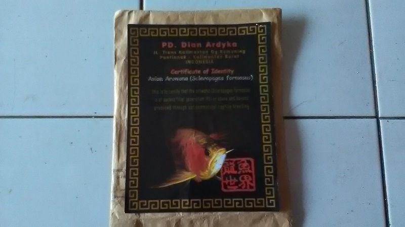 Contoh Gambar Sertifikat Arwana Golden Red