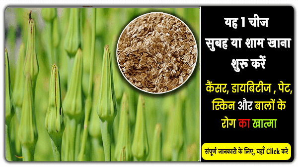 oats benefits full details