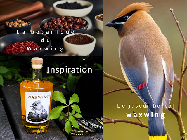 waxwing,gin,gatineau,gin-de-gatineau,artiste-in-residence-distillerie,gin-quebequois,madamegin
