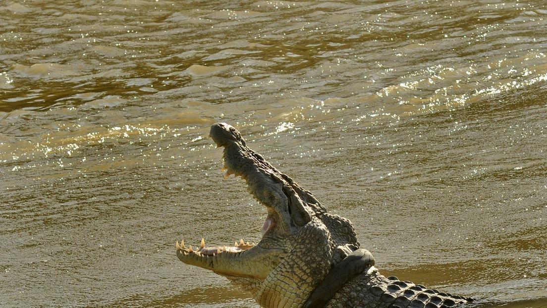 Un enorme cocodrilo persigue a un perro en el agua ante la impotente mirada de su amo