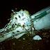 75 muertos por accidente de avión en Colombia donde iban futbolistas del equipo Chapecoense