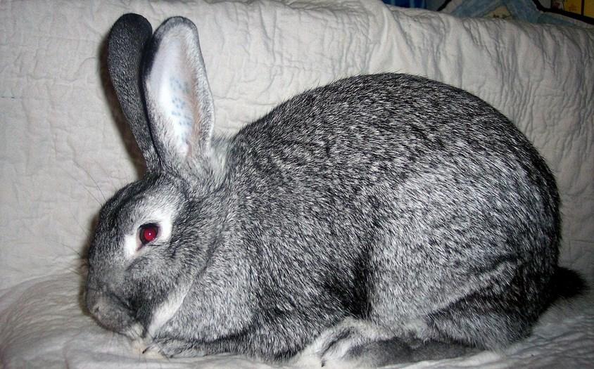 Memelihara Kelinci cewek manis imut gambar untuk wallpaper
