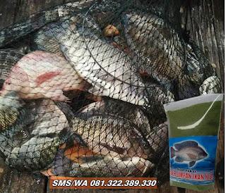 Umpan Khusus Ikan Nila