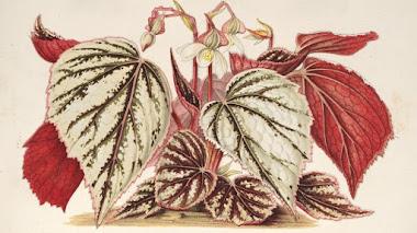 L'Illustration horticole: revista de plantas ornamentales de finales del siglo XIX