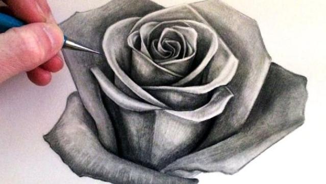 sketsa gambar bunga mawar merah