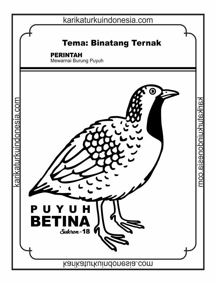 30 Ide Gambar Sketsa Burung Puyuh Tea And Lead