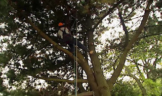 Phil tree surgeon