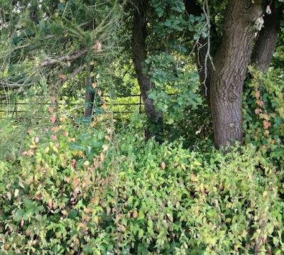 Wald, Herbst, herbstlicher Wald