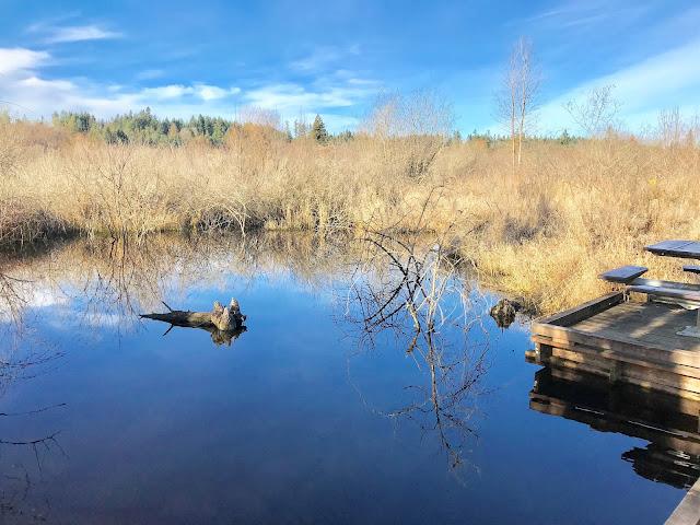 Explore Nature in Kitsap County WA