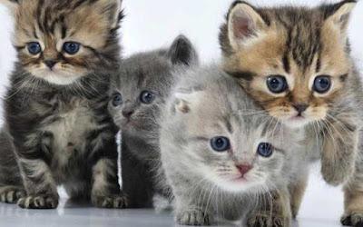 Macam Mana Nak Buat Kalau Kucing Datang Time Tengah Makan Kat Kedai