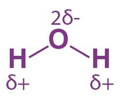 قطبية الرابطة التساهمية في جزيء الماء