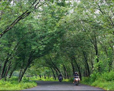 Kebun Karet Trikora