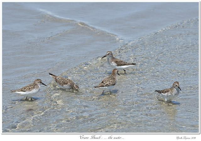 Crane Beach: ... the water...