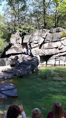 Seelöwen-Fütterung im Zoo Basel