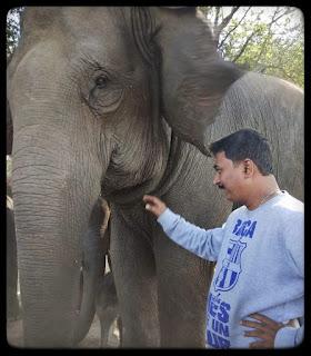 Elephant Whisperer,, Anand Shinde