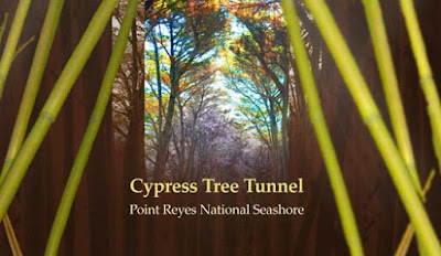 https://sites.google.com/site/luatkhoasanjosesite/sinh-hoat-3/ngay-25-05-2019-cypress-tree-tunnnel-in-n-sf-nnel-in