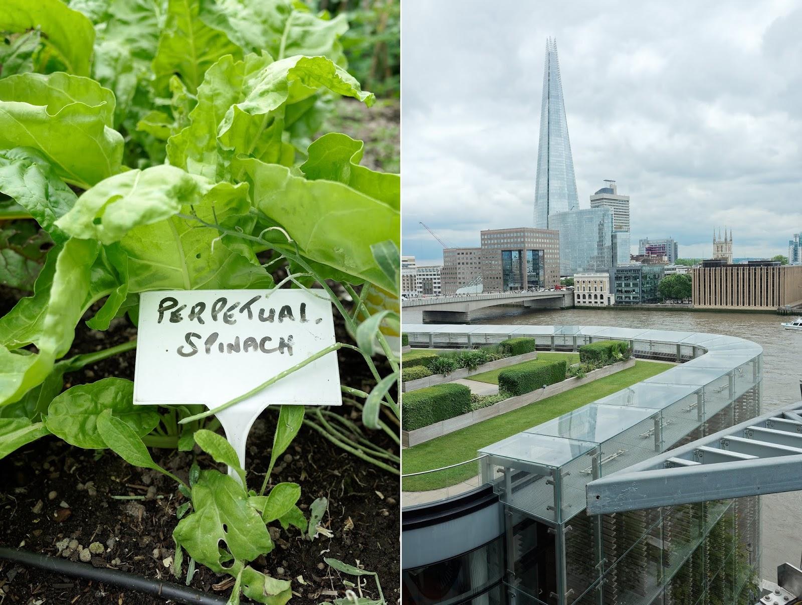 Open Garden Squares London - Nomura roof garden