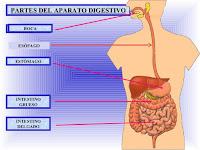 https://cplosangeles.educarex.es/web/edilim/curso_2/cmedio/alimentacion02/digestivo02/digestivo02.html