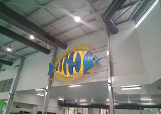 72 BIG Fish from the 2006 Commonwealth Games   Long Nosed Butterfly Fish