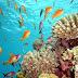 Египет запретит туристам кормить рыб