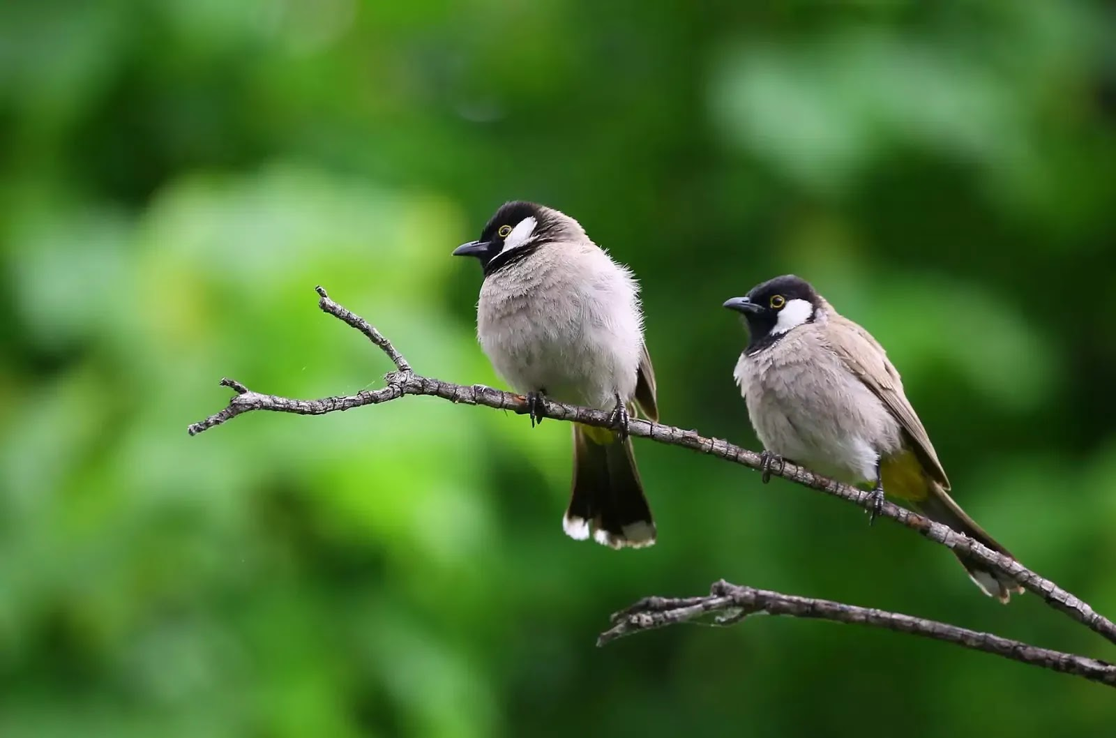 Birds wallpapers for android, Hd birds wallpapers for pc, Angry birds hd wallpapers for desktop, Birds wallpapers for desktop, Birds wallpaper for desktop free download, Full hd birds wallpapers for mobile