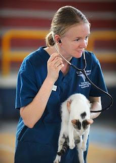 Eläinlääkärin palvelut
