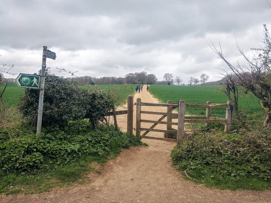 Cross Rousebarn Lane and climb the hill up to Dolly's Wood