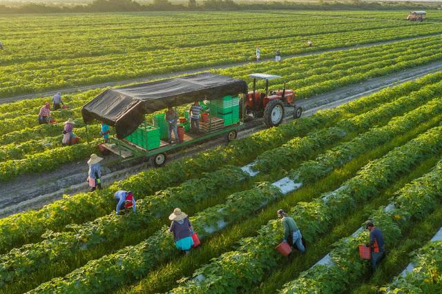 Càng hiện đại, con người càng có xu hướng tìm về thiên nhiên, nơi giúp họ lấy lại cân bằng và cảm giác bình yên vốn có. Bởi vậy mà những trang trại Organic với vẻ đẹp thuần khiết luôn được mọi người yêu thích ghé thăm. Cùng điểm danh những trang trại Organic xinh đẹp thuộc hàng Top thế giới ngay nhé! Bạn hẳn sẽ bất ngờ khi Việt Nam cũng có một trang trại hữu cơ thuộc hàng Top thế giới đấy!