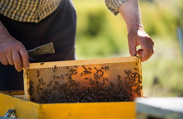 Οδηγίες για τη μετακίνηση των μελισσοκόμων
