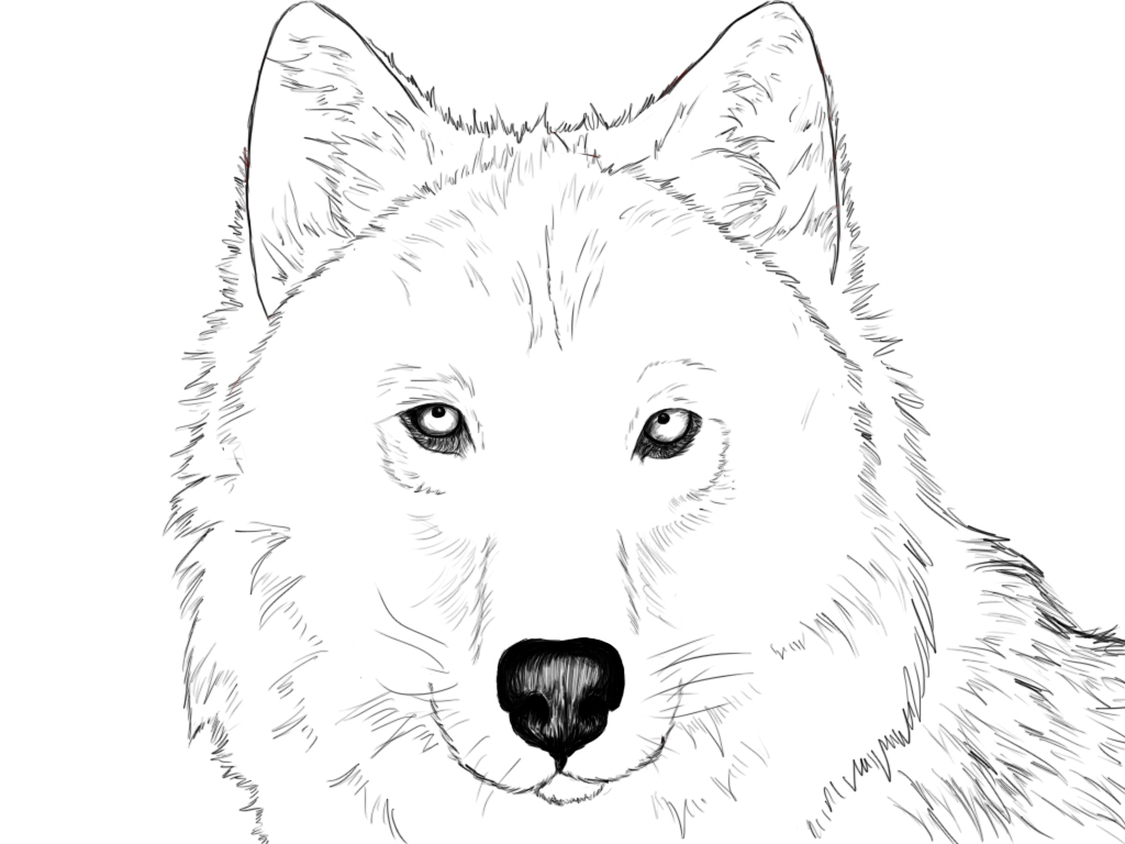 Realistic Wolf Eyes Coloring Pages