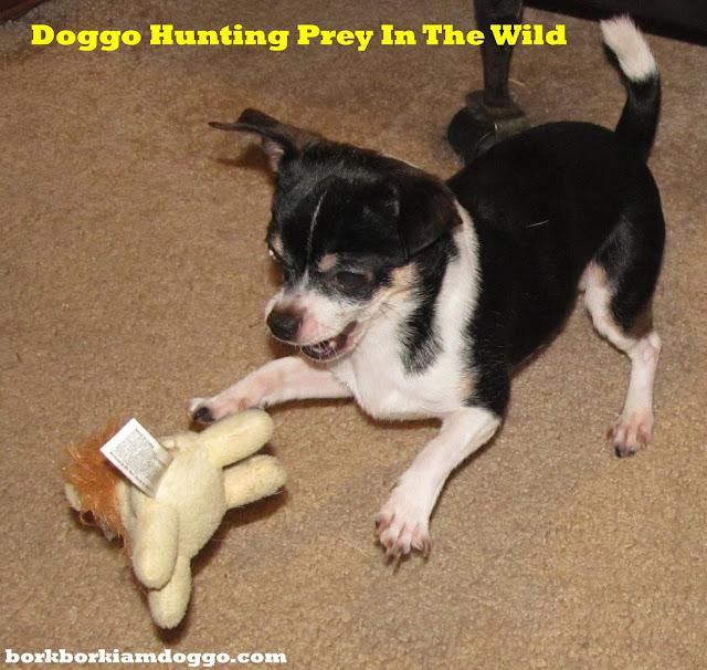 Doggo Hunting Prey In The Wild
