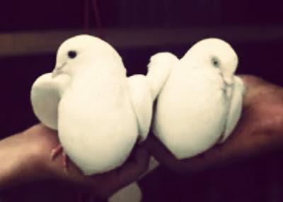 सपने में कबूतर देखने का क्या मतलब होता है?