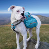 Kurgo Baxter Dog Backpack, Coastal Blue