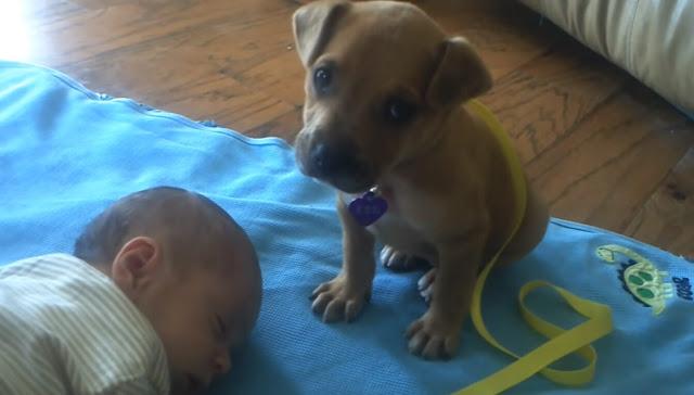 Малыш лег спать, а еще приятель щенок решил смиренно лечь рядом и оберегать юного хозяина
