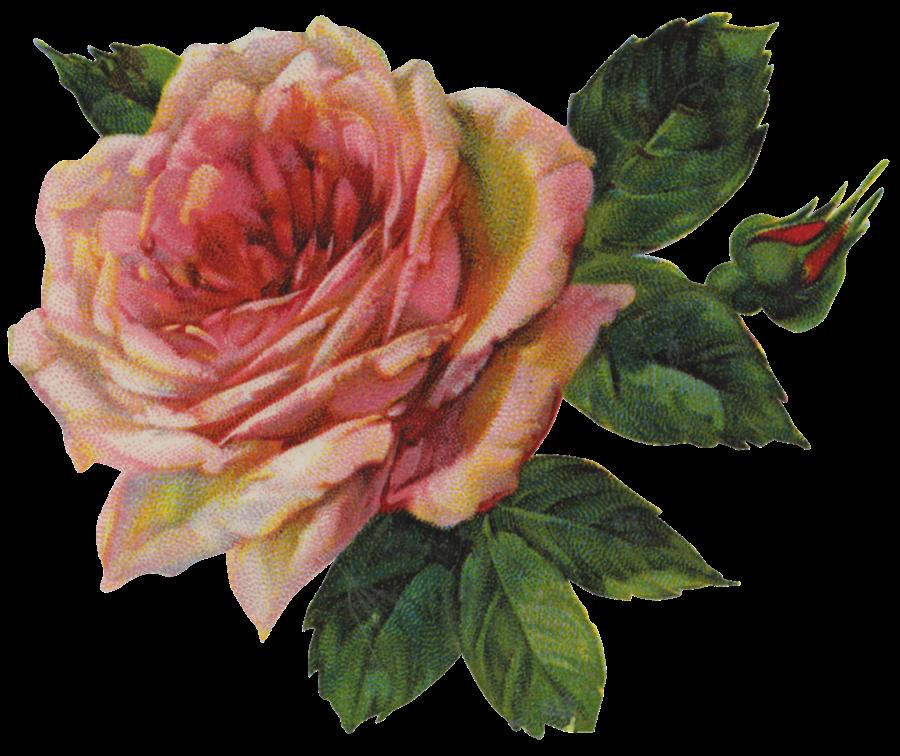 The Vintage Rose 118