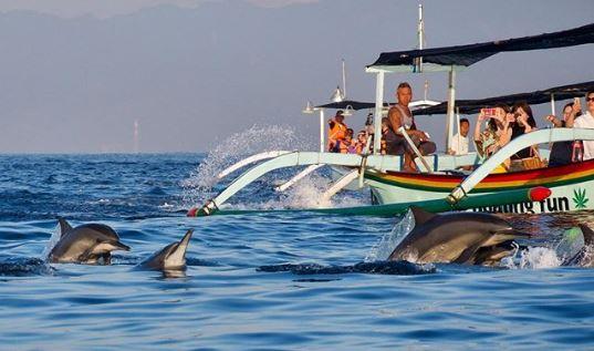 Pemandangan Lumba-lumba di Pantai Lovina