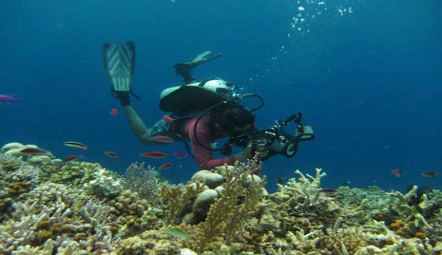 Bunaken diving