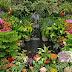 Jardinería por hobby o profesión, uno de los oficios más gratificantes