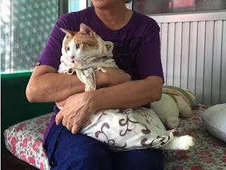 Tu gato odia en secreto que lo carguen como un bebé
