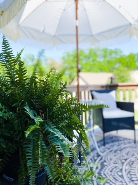 ferns on back deck