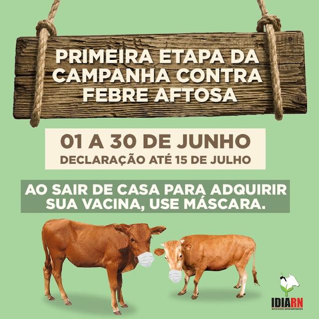 CAMPANHA DE VACINAÇÃO CONTRA FEBRE AFTOSA TEM INÍCIO EM 1º DE JUNHO