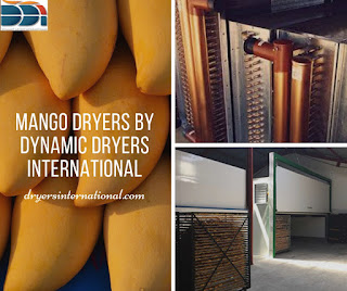 mango dryers