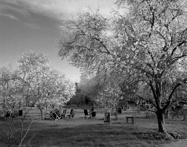 The Orchard Tea Garden in Grantchester