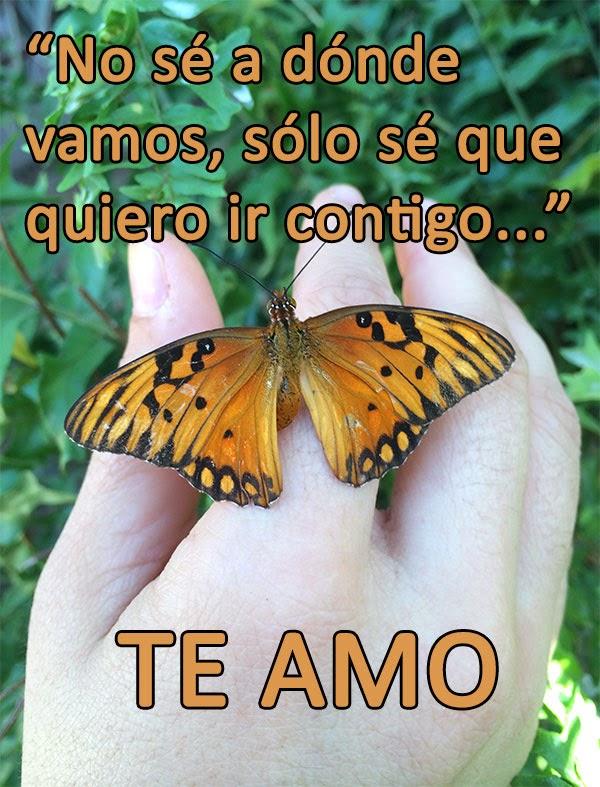 naturaleza tropical frases de amor con fotos de mariposas