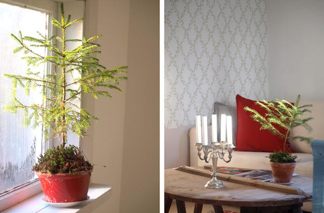 Julepynt naturligt med små juletræer i lerpotter