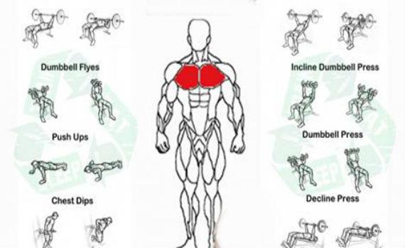Bodybuilder Chest Close Up Source Best Gym Workout Routine For Men Joey Garcia